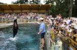 Táborhelyszínek, Nyíregyháza Ifjúsági Tábor állatpark
