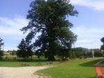 Táborhelyszínek, Szalafő Fogadó udvar és az Őrség legöregebb fája