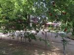 Táborhelyszínek, Balatonföldvár Panzió és Tábor, kert